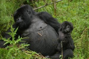 4 Days Gorillas And Nyiragongo Volcano Safari Tour Packages