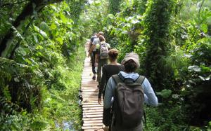 Chimpanzee Treks Tour In Virunga / Tongo Forest